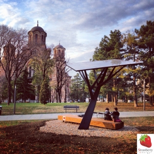 Strawberry_Tree_Black_in_Tašmajdan_Park_in_Belgrade
