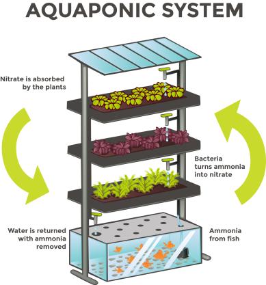 aquaponics-white