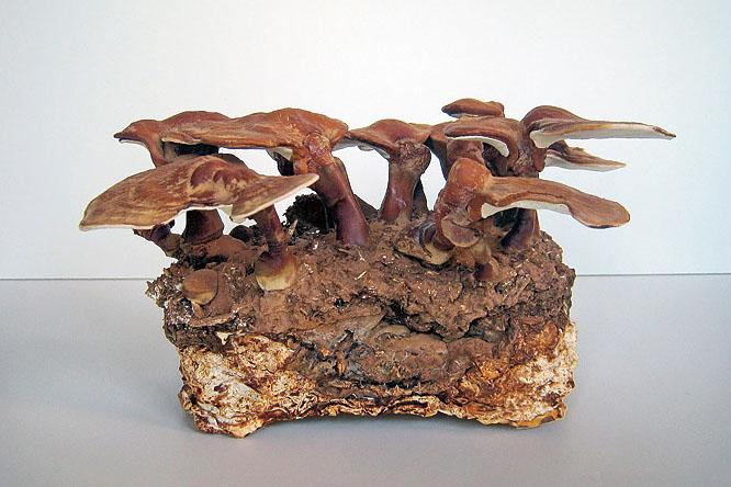 mushroom-furniture-1