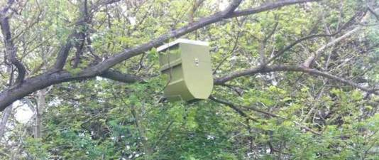 hive_in_tree.jpg.662x0_q70_crop-scale