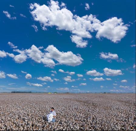 pic cotton 1