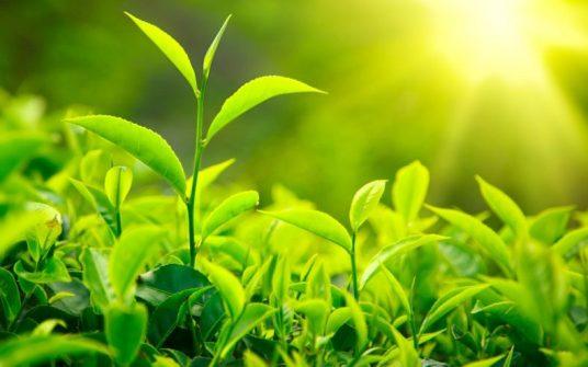 Supercharge Plants -1