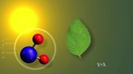 Supercharge Plants -3